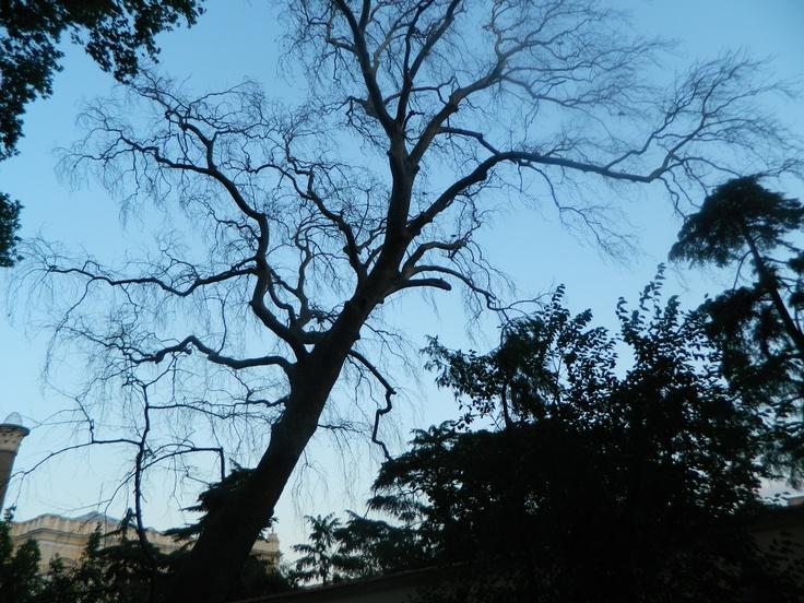 good tree <3