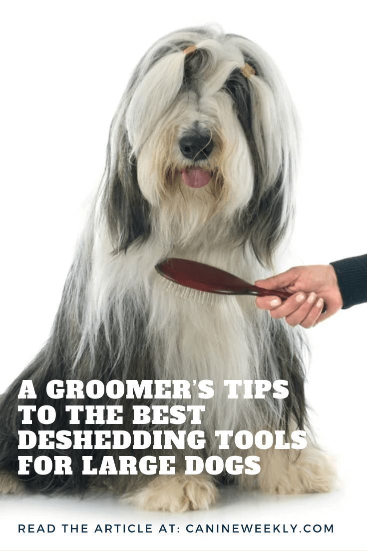 13 Best Dog Brushes For Shedding Short Long And Thick Fur