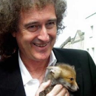 Acouple of foxes: Famous Animal, Animal Activists, Animals Fight, Pin Queen Mvepnk Choc, Foxes For Cyrus, Baby Foxes, Brian May, Animals Foxes