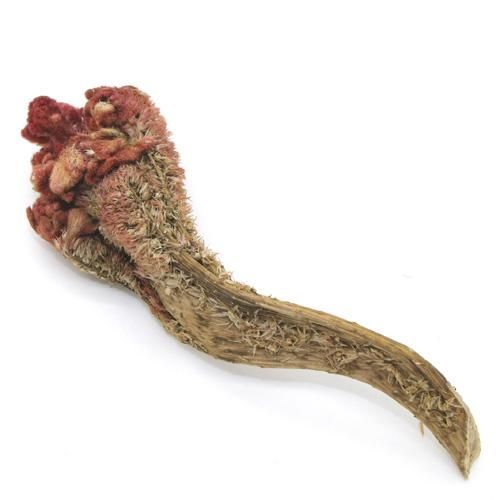 Ji Guan Hua (coxcomb flower) *restrains & holds to stop bleeding, vaginal discharge (LOWER BURNER) *clears heat, binds intestines, stops bleeding