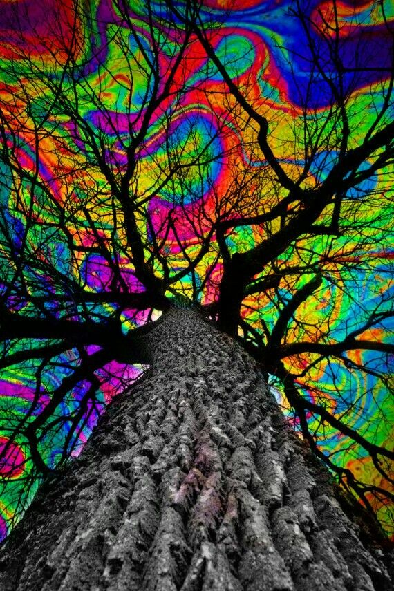 psychedelic tree trippy art | trippy vibe edits in 2019 ...