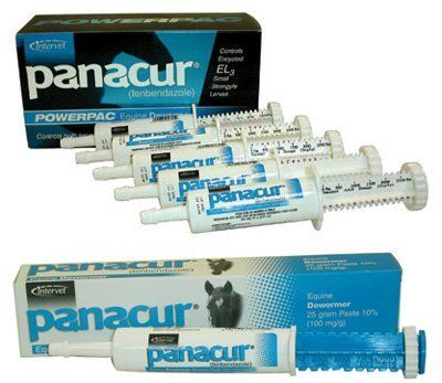 Panacur Paste horse wormer 1-25 gm syringe by Intervet. $9.29. Apple-cinnamon flavored paste is safe for foals, pregnant mares and stallions. Contains 100 mg fenbendazole per gm.. 1-25 gm syringe treatment for a 1,250 lb. Apple-cinnamon flavored paste is safe for foals, pregnant mares and stallions. For the control of large and small strongyles, pinworms and ascarids. Contains 100 mg fenbendazole per gm. Each 25 gm syringe treats up to 1,100 lbs. For foals and w...