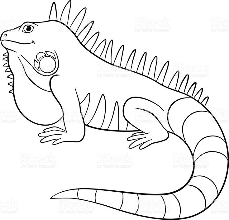 Galapagos Land Iguana coloring species #14 (With images ...