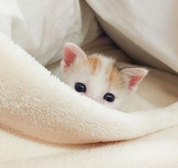 Nice Cute Animals Cartoon Fox Cute Baby Animals Wallpaper Hd! #cutestcatsandkittensever 8