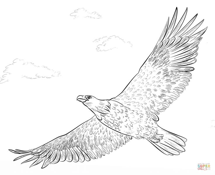 Bald eagle coloring pages free ~ 950 best birds coloring images on Pinterest | Coloring ...