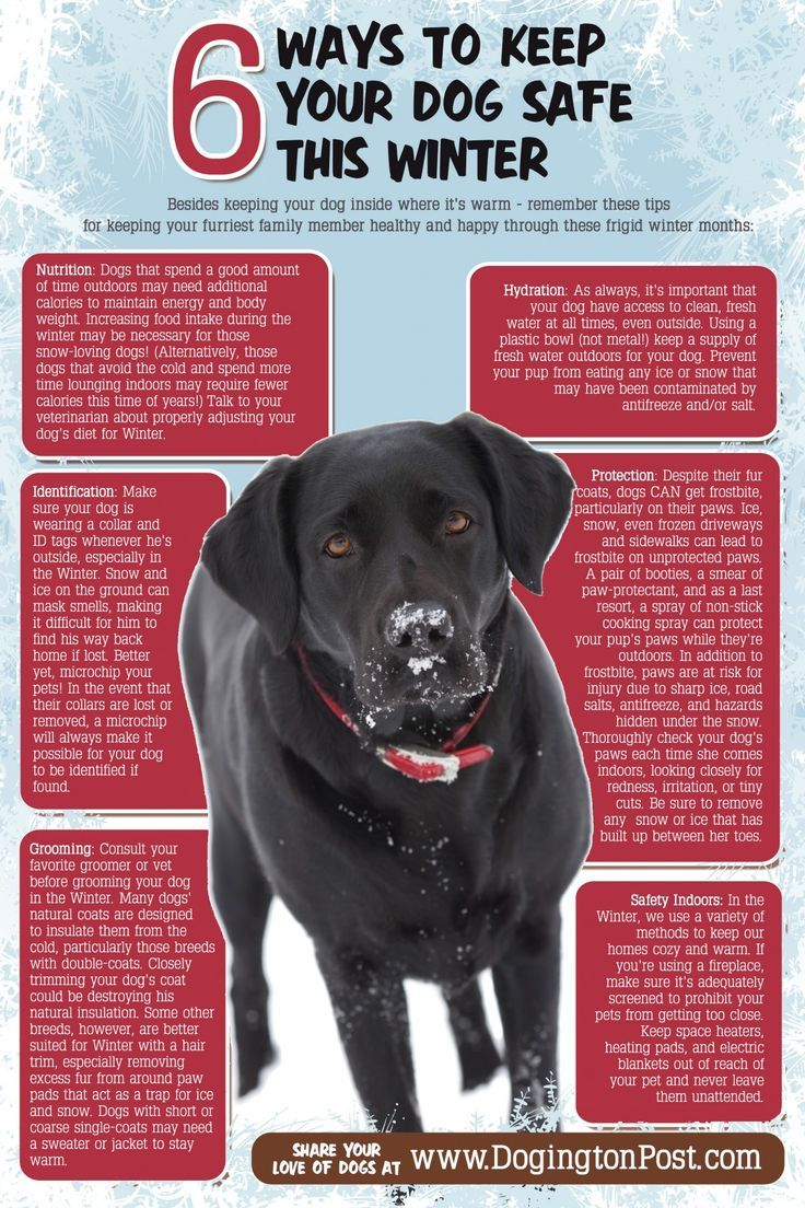 How To Care For A Dog Tips And Advice You Can Find Out More