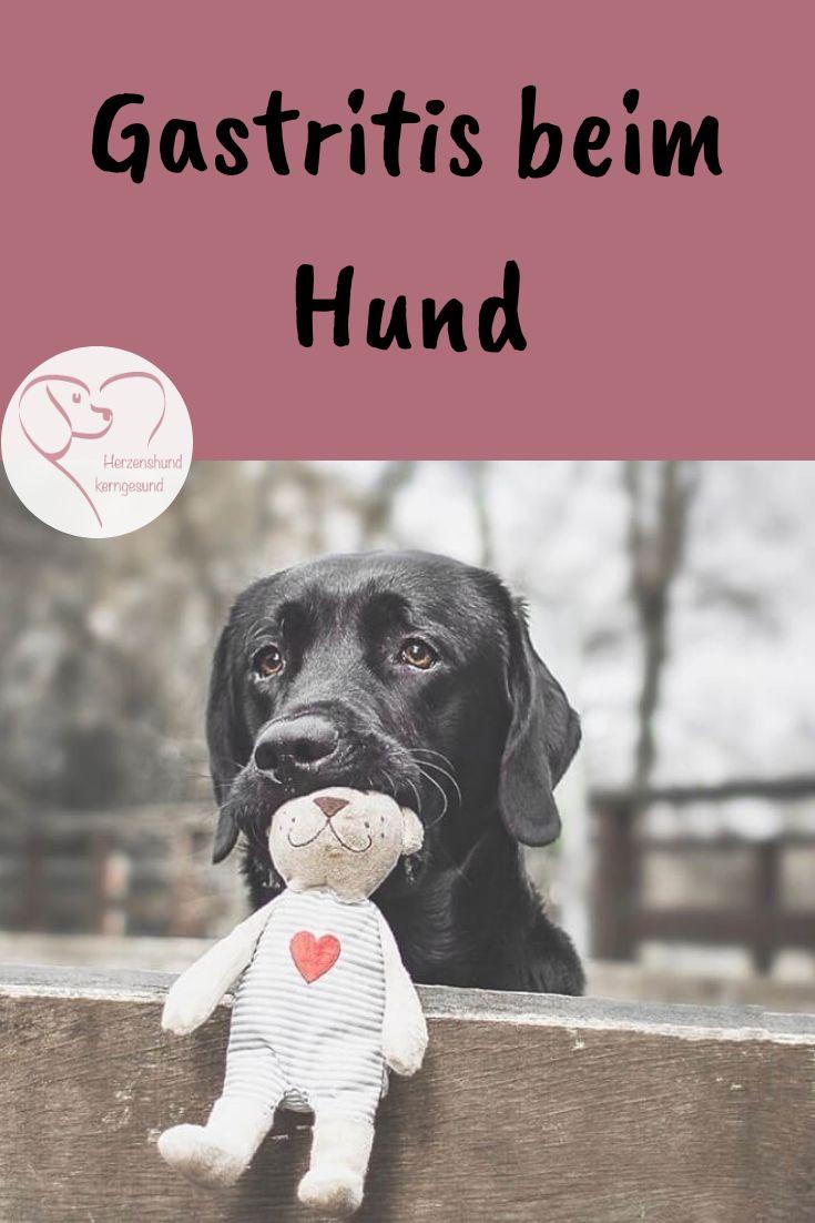 Gastritis beim hund hunde durchfall hund und gesunde hunde