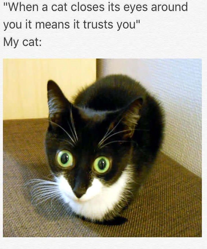 Trust Issues | Cat Memes | Funny animal memes, Funny cats
