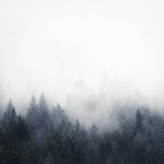 Forest fog art print, fog, forest, art photography, mountain art, scandinavian wall art, modern wall art, nordic art