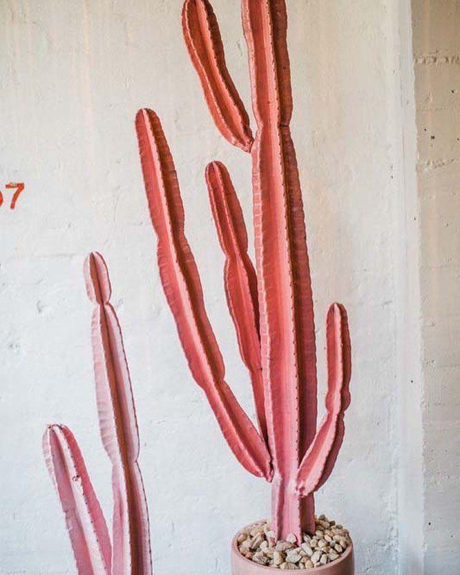 SYSTÈME de valeurs (@systeme_de_valeurs) on instagram: pink cactus vibes