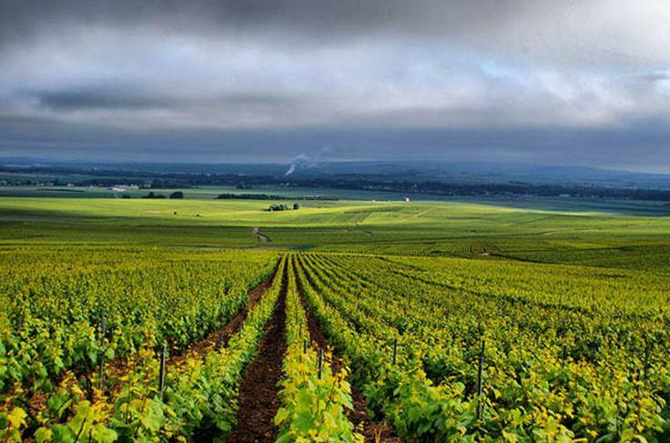 Champagne Lepreux Penet #wine #champagne #chateau #vins