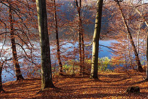 Las bukowy nad jeziorem
