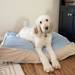 Do you love your fur baby as much as I love mine? Then make a new bed for them!