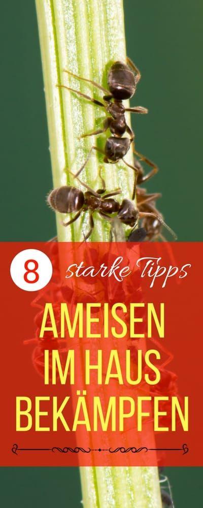 Ameisen im Haus bekämpfen | Haushaltsfee.org