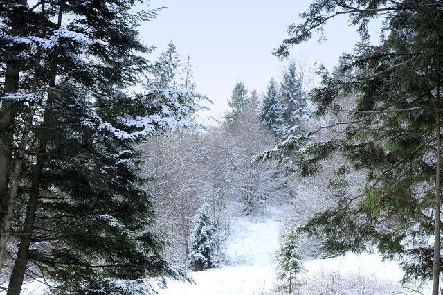 relaxotour: Téli képek