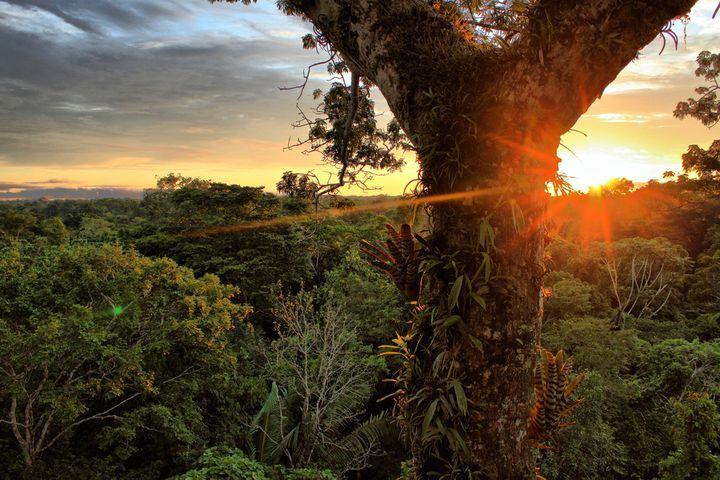 エクアドルの「ヤスニ国立公園」です。エクアドルアマゾンに位置し、地球上で最も生物学的に多様な場所の1つと言われており、4,000以上の植物種、170の哺乳動物種、および610種の鳥類が住んでいます。