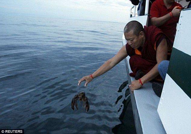 """O GRITO DO BICHO"": Na Inglaterra budistas libertam 200 lagostas e car..."