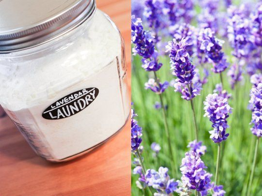 How To Make Your Own Lavender Laundry Detergent