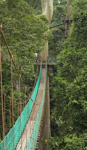 Danum Valley - Borneo