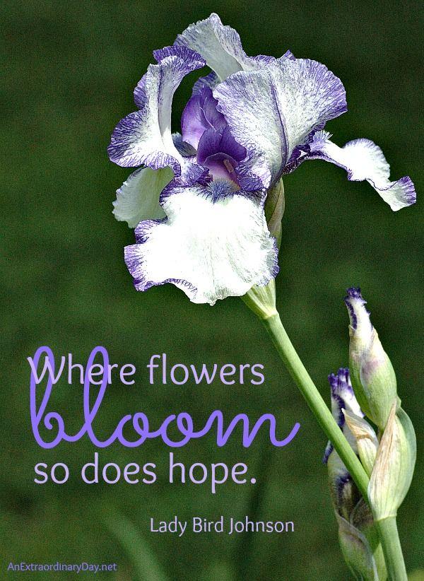 images  floral quotes  pinterest ralph