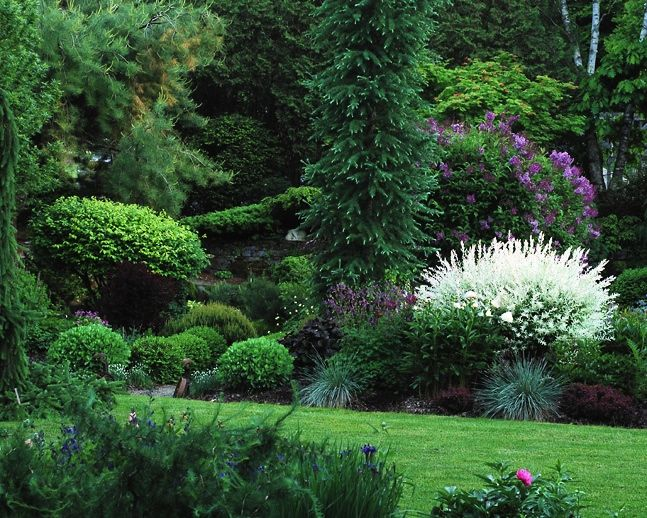 Perennial Gardens 2015. The purple flowering shrub is lilac but I am not sure what the white is. Irises are next to it.