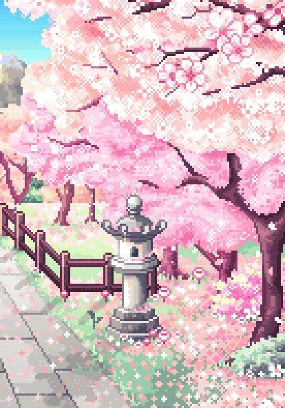 cherry blossum trees | Tumblr