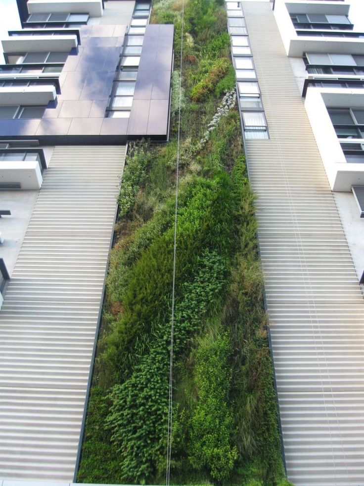 17 best images about green wall patric blanc on for Vertical green wall