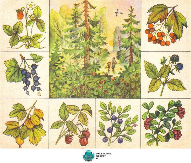 Растительность картинки для детского сада