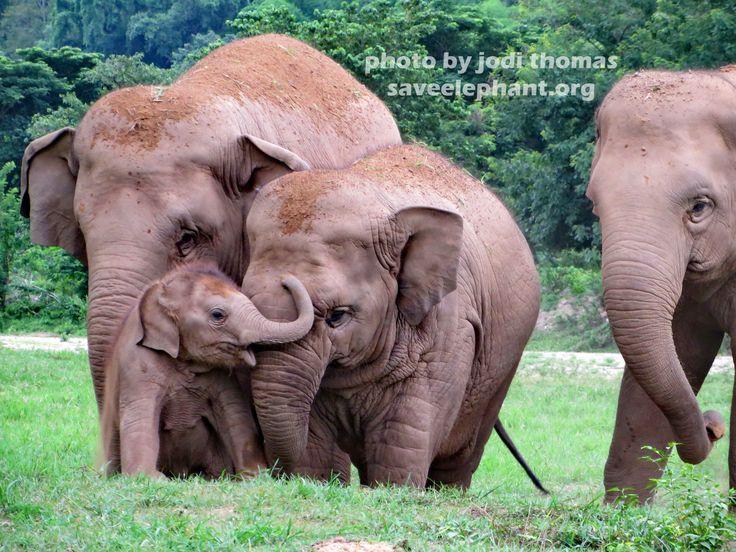 Save Our Elephants