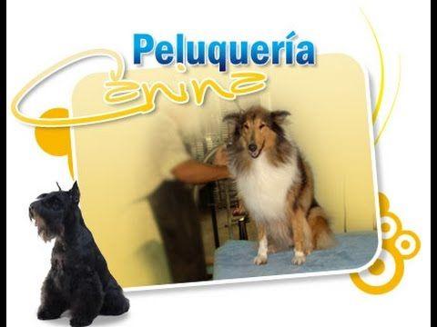 Curso Gratis de Peluquería Canina - Clases de Peinado de Perros - YouTube