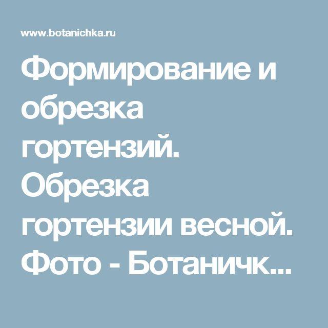 Формирование и обрезка гортензий. Обрезка гортензии весной. Фото - Ботаничка.ru