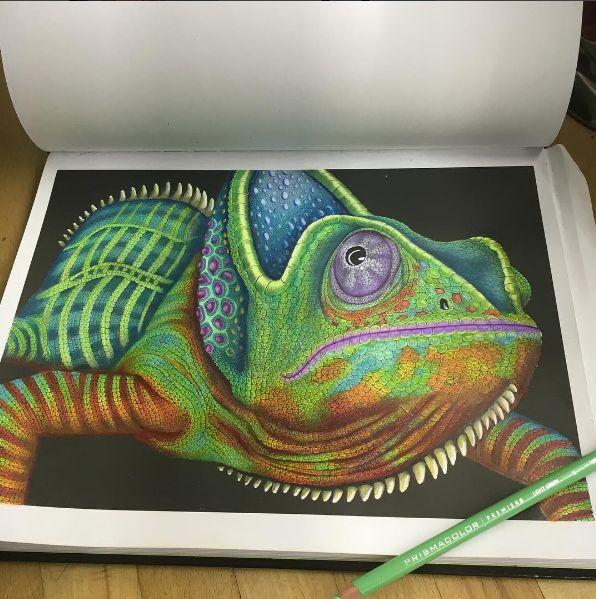 Chameleon 2 Sara Campana Graphite IllustrationsPrismacolorAnimal DrawingsPencil ArtColoring BooksAdult