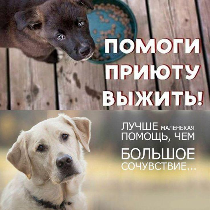"""все, у кого доброе сердце, обращаемся к вам! ОО """"ЧиП"""" - """"Твори Добро"""" города Балхаша (приюту для бездомных и попавших в беду животных) НУЖНА ВАША ПОМОЩЬ!!! ДЛЯ ОБУСТРОЙСТВА ДОПОЛНИТЕЛЬНЫХ ВОЛЬЕРОВ И ОГРАЖДЕНИЯ УЧАСТКА НАМ ОЧЕНЬ НЕОБХОДИМЫ МЕТАЛЛИЧЕСКИЕ ТРУБЫ (ДИАМЕТРОМ ОТ 20 СМ), ОБРЕЗКИ МЕТАЛЛИЧЕСКИХ СТОЯКОВ, ПЕСОК, ЦЕМЕНТ, ДЕРЕВЯННЫЕ БРУСКИ И ПР. Будем рады любой помощи в виде строительных материалов и последствий вашего ремонта, пригодных для строительства. САМОВЫВОЗ В ..."""