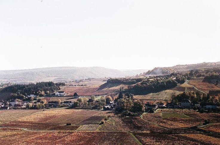 Respirer au milieu des #grandcrus  - #canonae1 . #bourgognenatale #duvinetdufromage #soleildore  #Regram via @becinereb