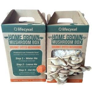 This DIY mushroom grow kit from Life Cykle utilises coffee grounds to cultivate your own gourmet Oyster mushrooms. The original super food, Oyster mushrooms are packed with protein, calcium, magnesium, selenium and a variety of vitamins. Expect your first mushrooms in 10-16 days. Just spray, eat, repeat! #mushroomkitdiy