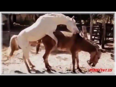 Animal Sex List  Free Beastsex Videos