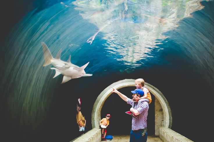 Dallas Aquarium Shark Tunnel, Lissa Chandler