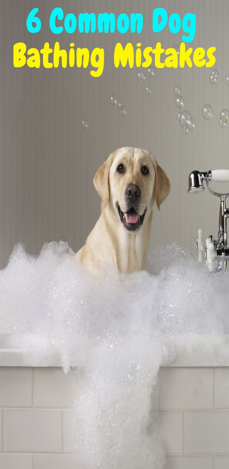 6 Common Mistakes You Make While Bathing Your Pet Labrador