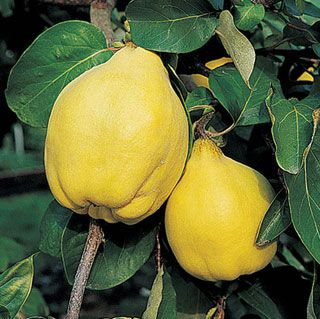 how to grow fruits faater