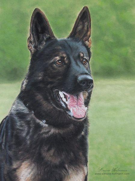 """Hundeportrait Deutscher Schäferhund """"Neo"""", Pastellkreide - Tierportrait nach Fotovorlage von Simone Hofmann - www.simone-hofmann.com -  Dog painting"""