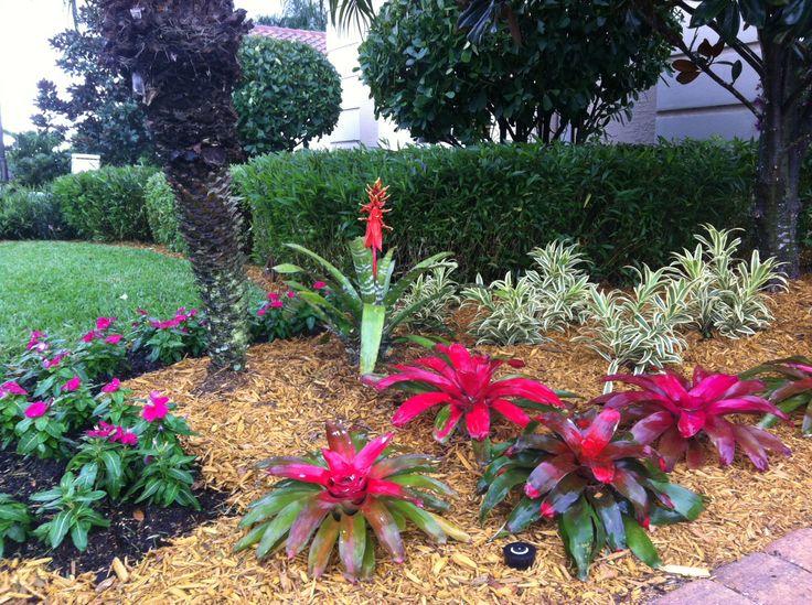 Bromeliad tropical design