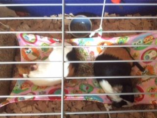 Samen slapen in het hangmatje....