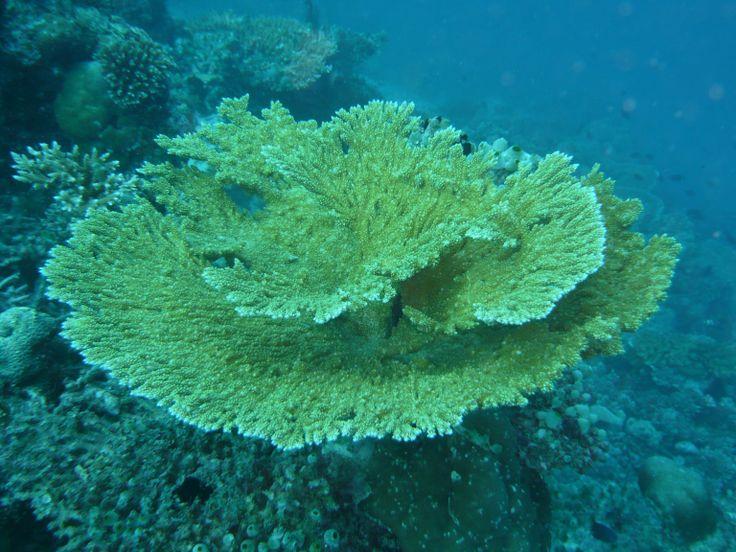 SCIENTIFIC CRUISE MALDIVES -MAY 2014 -MY DUKE OF YORK