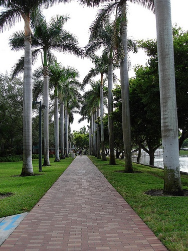 University of Miami - I can't even imagine how many times I walked this path from the dorms to the UC/Class/Richter