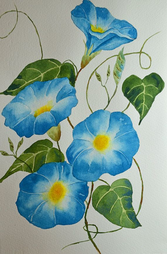 Pin By Angie Folds On Painting Morning Gloys Watercolor