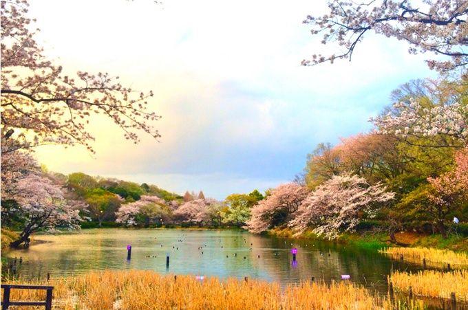 1位は誰もが納得の桜の名所!関東人気お花見スポットランキングTOP10 | RETRIP