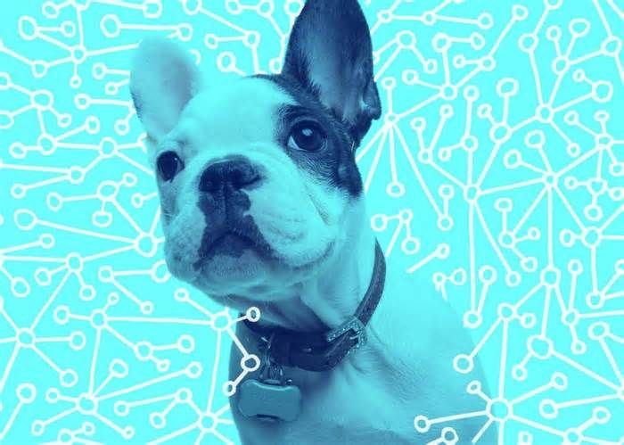 Go Ahead, Quantify Your Pet said that she couldn't think of any animal patients that have come in with a Fitbit-style product—and that's in the heart of Silicon Valley. The clinic instead sells and sees a number of pet owners using a GPS tracker called Gibi, mostly because the ...
