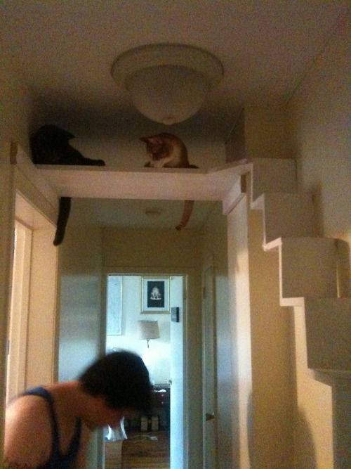 Cat perch - this is clever, put a little bed up there for them, gives them a chance to get away!