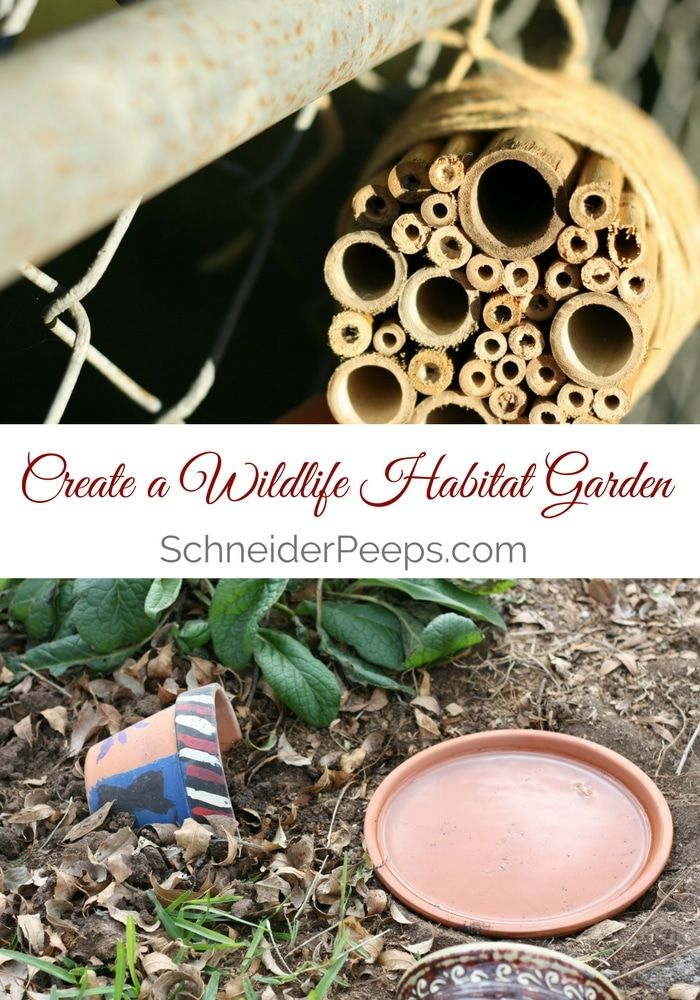Creating a wildlife habitat garden is one the best things you can do to create balance in our garden. Learn how to create your own wildlife habitat garden.: