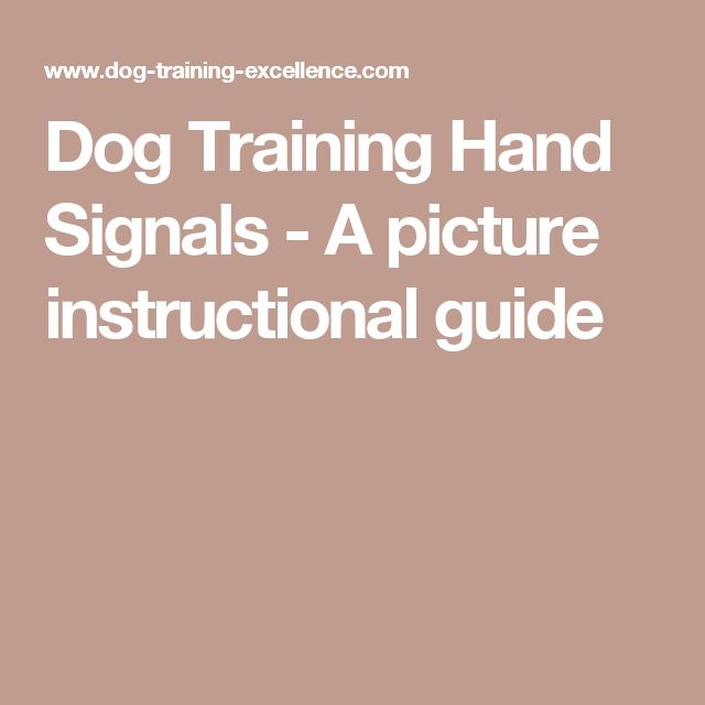 Do You Get Paid To Train A Guide Dog